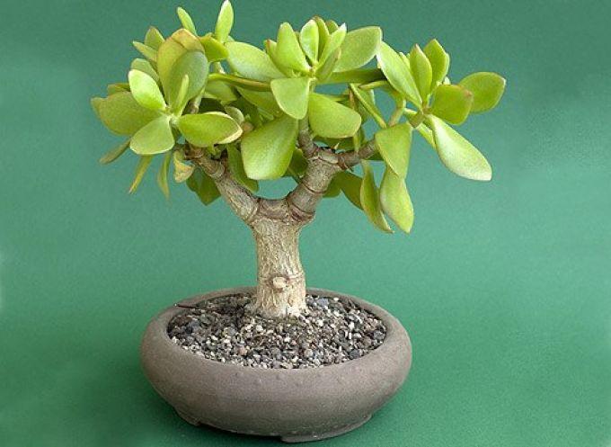 Растения по фен-шуй имеют свои значения, например это принесет богатство в семью