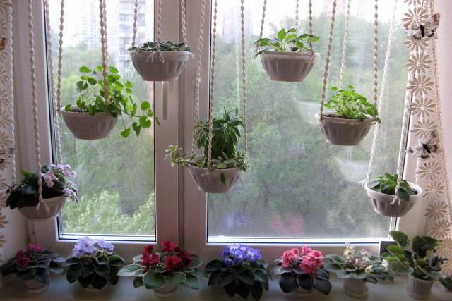 Мошки могут завестись и в домашних растениях.
