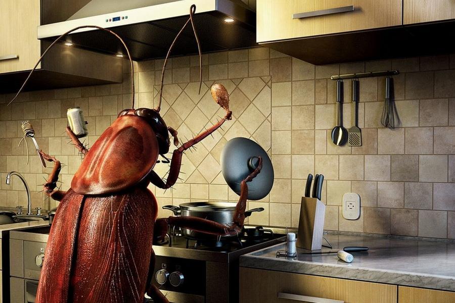 Не дайте насекомым хозяйничать на кухне