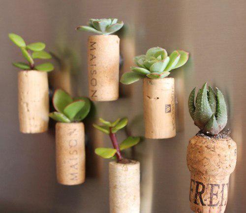 Растения можно высадить на пробку и прикрепить к холодильнику.
