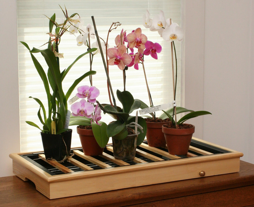 Фото как ухаживать комнатными цветами в