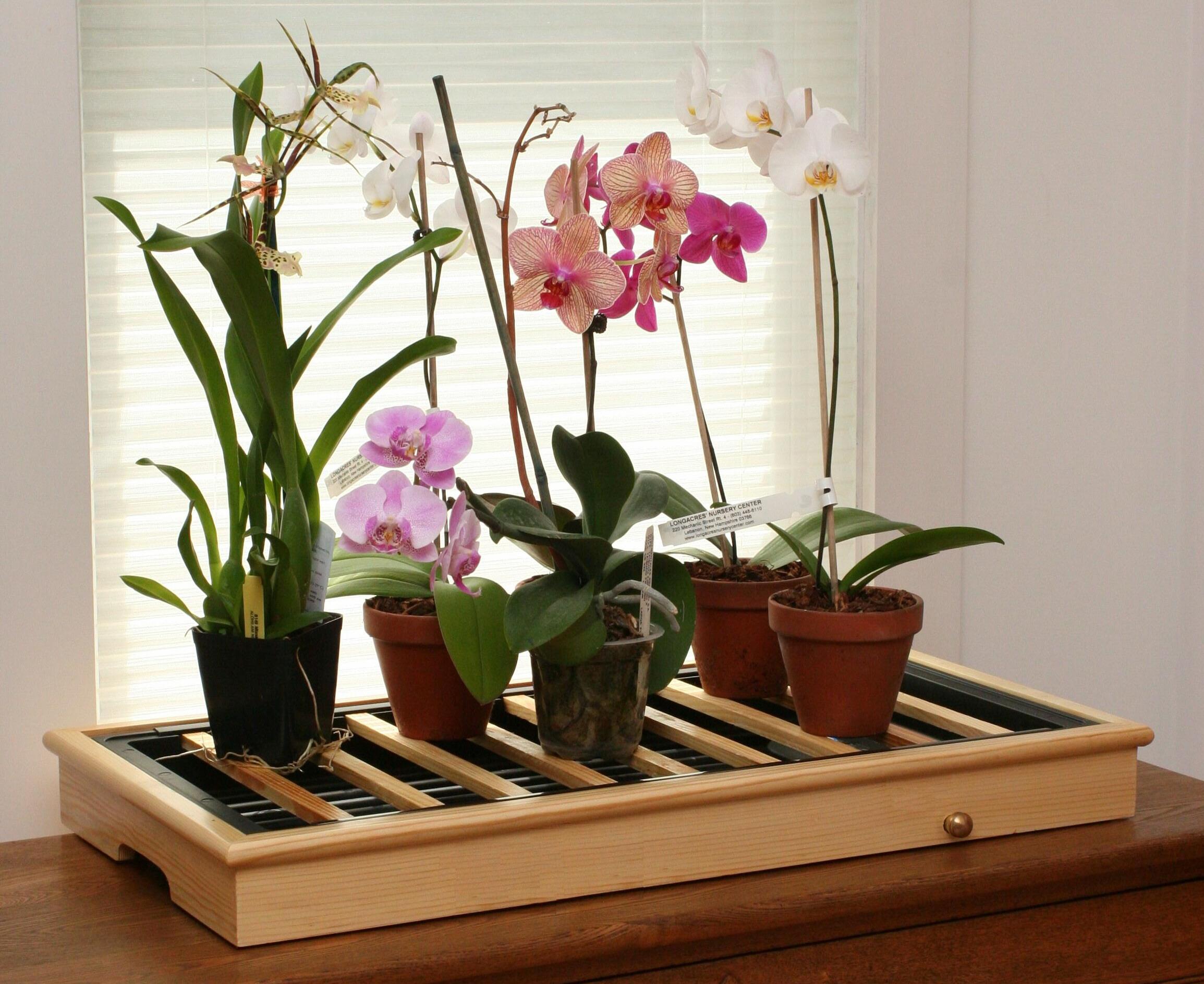 На окне кухни великолепно смотреться требовательные цветы из семейства Орхидных