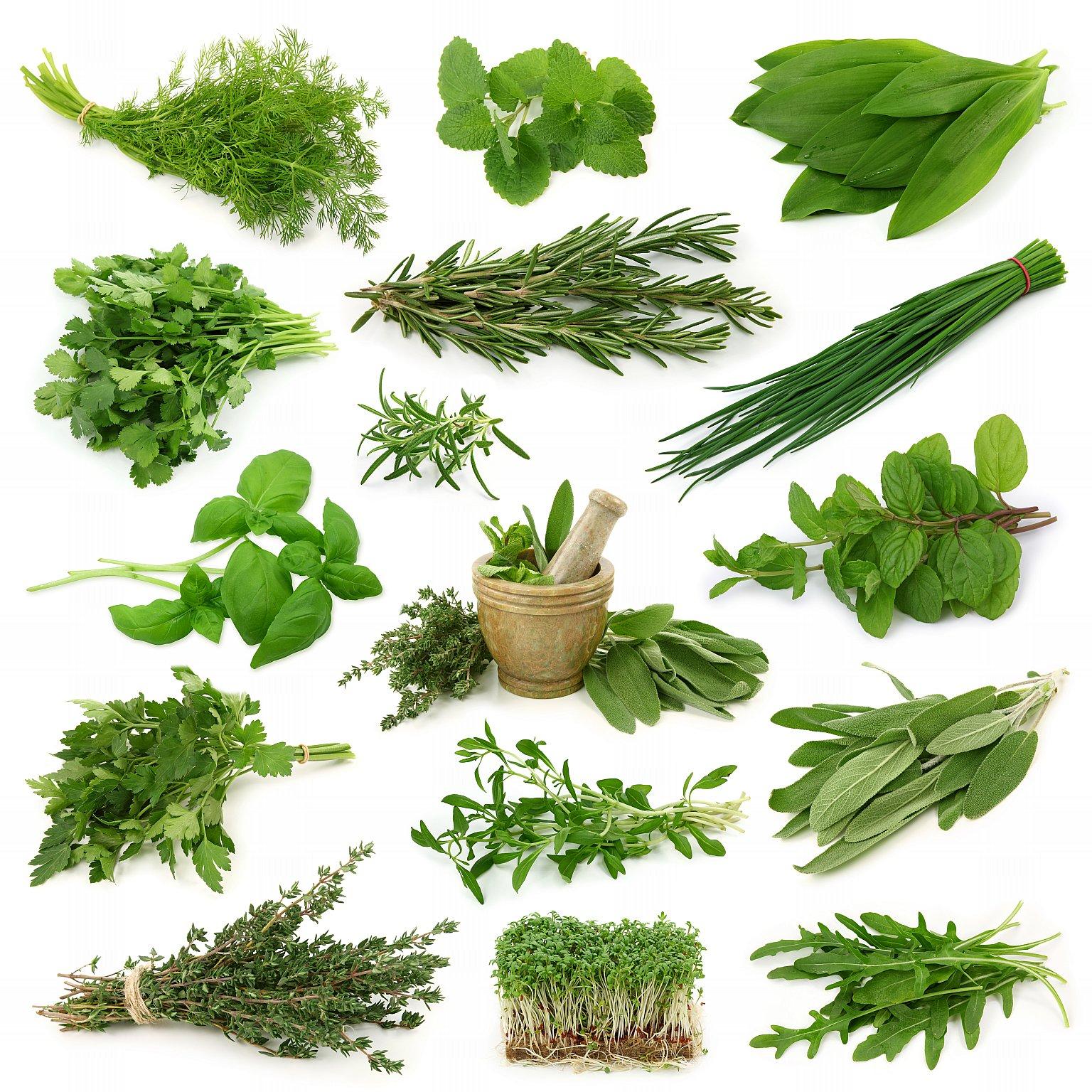 Пряные травы,которые можно вырастить на подоконнике кухни
