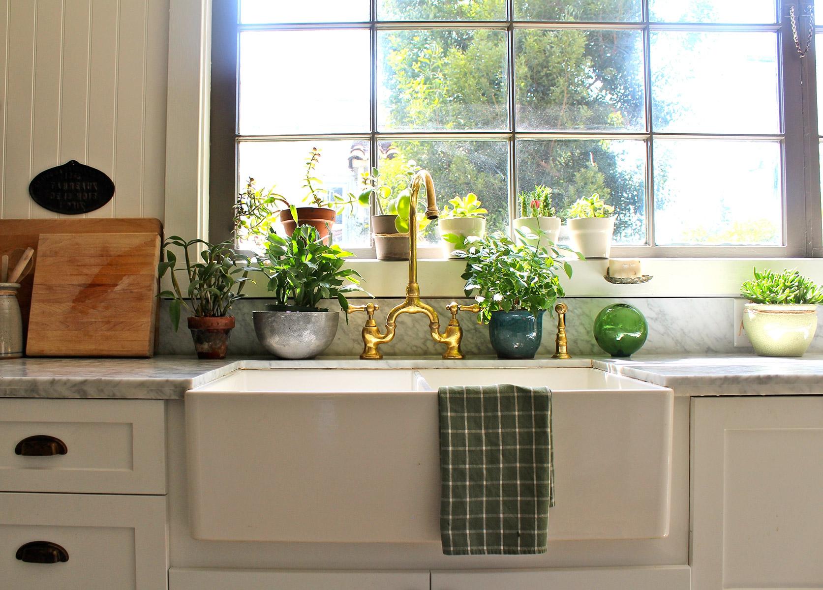 Фото комнатные цветы в интерьере кухни
