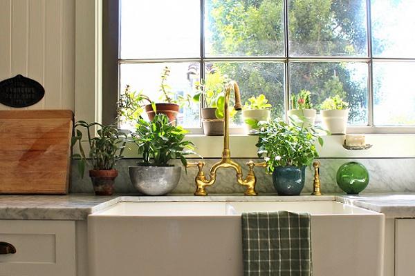 Комнатные растения на кухонном столе и подоконнике