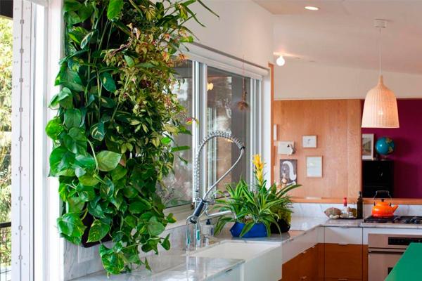 Вьющиеся растения на стене кухни